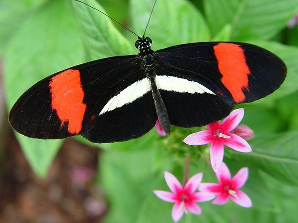 Butterflies Sony F717